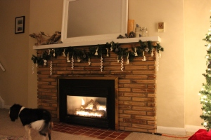 A photo of the much beloved fireplace being photo bombed by my furry cohort. (Photo Credit: Sula's camera)